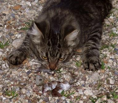 кошки против кротов