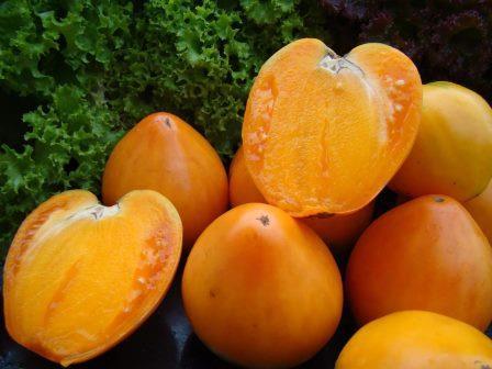 разновидности томата
